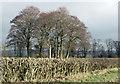 SE8285 : Copse of mature trees, High Scalla Moor by Pauline E