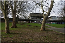 TQ3470 : Winter trees by the National Sports Centre by Bill Boaden