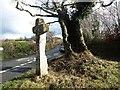 SX7168 : Hollowed tree and stone cross at Hawson Cross by David Gearing