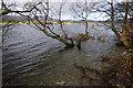 NY4521 : Ullswater shore south of Sharrow Bay by Ian Taylor