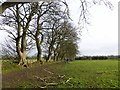 NZ0872 : Field and line of trees near Stamfordham by Oliver Dixon