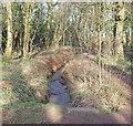 SK5346 : Bulwell Hall Park Fish Ponds Vicinity, Bulwell, Notts. by David Hallam-Jones