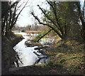 SK5346 : Bulwell Hall Park Fish Ponds, Bulwell, Notts. by David Hallam-Jones