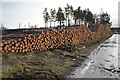 NH5774 : Timber stack at Boath by Dorothy Carse
