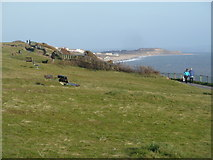 SZ1191 : Boscombe: benches on Boscombe Overcliff by Chris Downer