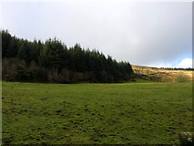 J0525 : Camlough Forest by Dean Molyneaux