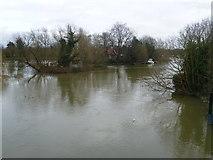 TQ1667 : An island next to Thames Ditton Island by Marathon