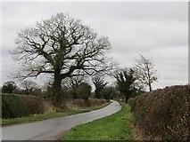 SJ5021 : Lane between Harmer Hill and Haston by Richard Webb