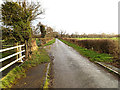 TM3691 : Mill Pool Lane, Ellingham by Adrian Cable