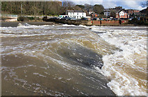 SX9192 : Weir on the River Exe by David P Howard