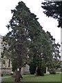 TQ4268 : St George Bickley: churchyard (D) by Basher Eyre