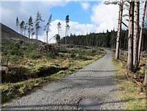 J3629 : The upper forest track in Donard Wood by Eric Jones