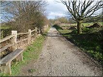 TQ6868 : Path approaching the Deer Park in Cobham Park by Marathon