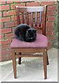 NZ8911 : Cats sleep anywhere by Pauline E