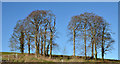 J3871 : Tree clumps near Belfast by Albert Bridge