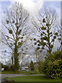 ST5964 : Trees with pom-poms by Neil Owen