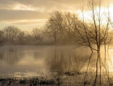 SU5495 : Early morning by the swollen River Thames by Steve Daniels