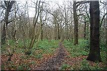 TQ4475 : Green Chain Walk, Oxleas Wood by N Chadwick
