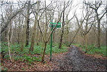 TQ4475 : Capital Ring and Green Chain Walk divide, Shepherdleas Wood by N Chadwick