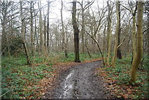 TQ4475 : Green Chain Walk, Shepherdleas Wood by N Chadwick