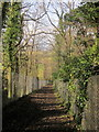 ST5982 : Community Forest Path in Pegwell Brake by Derek Harper