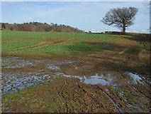 TQ0147 : Fields near Chilworth by Alan Hunt