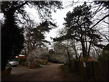 TM1543 : Ancaster Road, Ipswich by Hamish Griffin