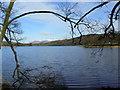 SD3695 : Branches over Esthwaite Water by James Allan