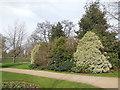 TQ3977 : Trees in Greenwich Park by Paul Gillett