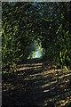 SO6233 : Ridge Hill trig point by John Winder