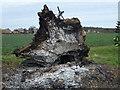 TF1000 : Stumped - Near Model Farm in Upton by Richard Humphrey