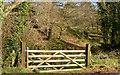 J3268 : Wooden gate, Minnowburn, Belfast by Albert Bridge
