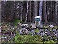 NO5496 : NE corner of  Balfour Forest by Stanley Howe