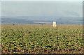 SE5681 : Trig point in turnip field by Pauline E