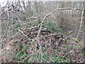 TL9543 : Pile of logs in Langley Wood, Round Maple by Hamish Griffin