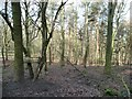 SE2244 : Chevin Forest Park [14] by Christine Johnstone