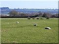 SP8794 : Ridge and furrow near Caldecott by Oliver Dixon
