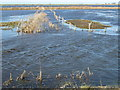TF3500 : The Leam is flooded - The Nene Washes by Richard Humphrey