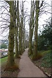ST5773 : Path in Brandon Hill Park by DS Pugh