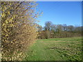 TQ6145 : Catkins along a field edge path by Marathon