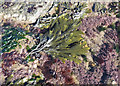 TA0587 : Rockpool on rocky foreshore by Pauline E