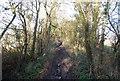 TM1650 : Green Lane heading north by N Chadwick