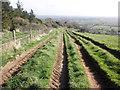 ST3756 : Farm tracks on Loxton Hill by Roger Cornfoot
