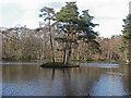 SU8164 : Heath Pond, Simons Wood by Alan Hunt