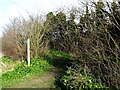 TM4461 : Bridleway to the B1122 Aldeburgh Road by Adrian Cable