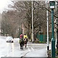 SJ9695 : Two horses on Mottram Road by Gerald England