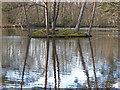SU8164 : Heath Pond island by Alan Hunt