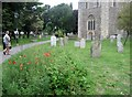 TQ2105 : Church of St. Mary de Haura, Shoreham-by-Sea by Tricia Neal