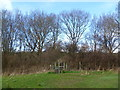 TQ4736 : Embankment of the old East Grinstead to Tunbridge Wells Railway by Marathon