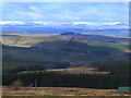 NT6508 : View from the Cheviots by Oliver Dixon